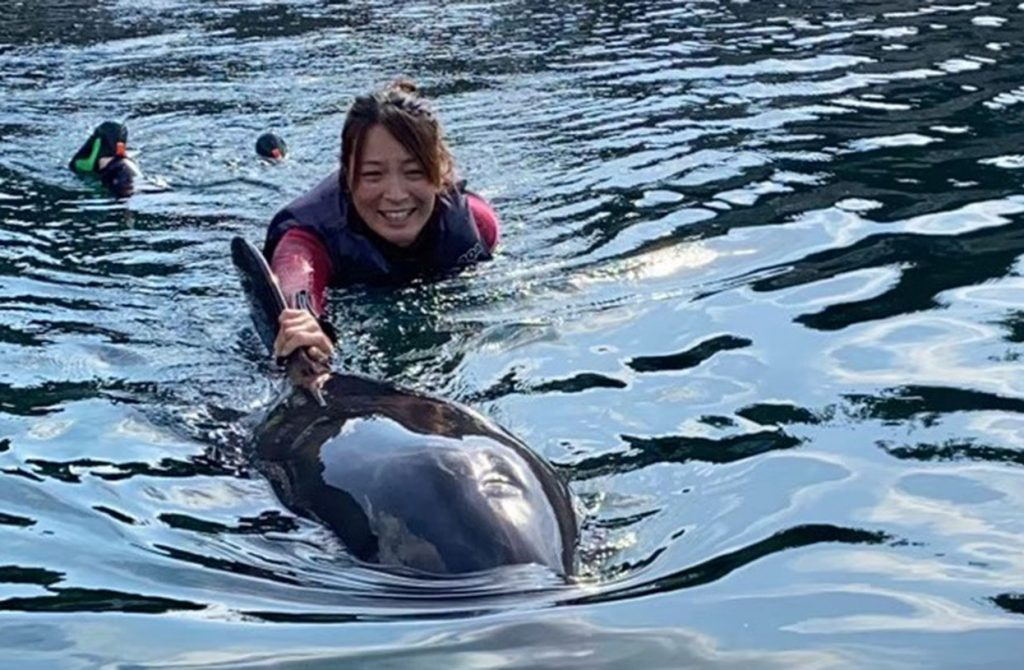 dolphin_swim01